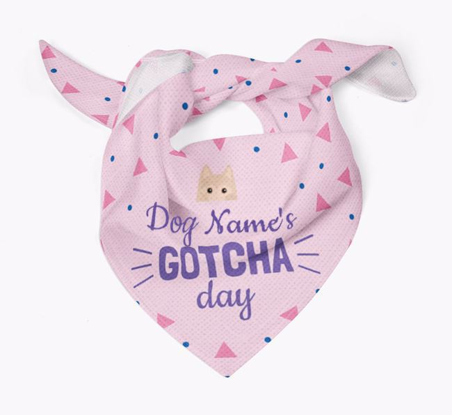 'Gotcha Day' - Personalised Schipperke Bandana